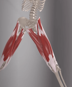 adductor spasm, remedies for muscle spasms